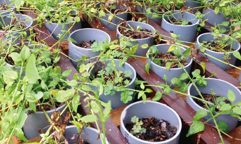 パイプによる栽培